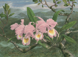 Watercolor painting of Cattleya shroederae in a mist forest
