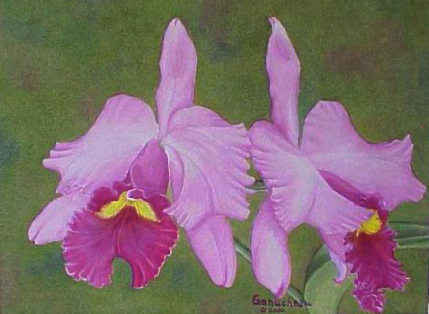 Cattleya hybrid orchid watercolor painting C Irene Finney