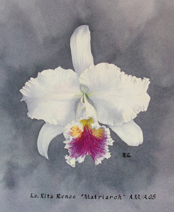 watercolor painting of the cattleya orchid cross-hybrid Lc Rita Renee Matriarch