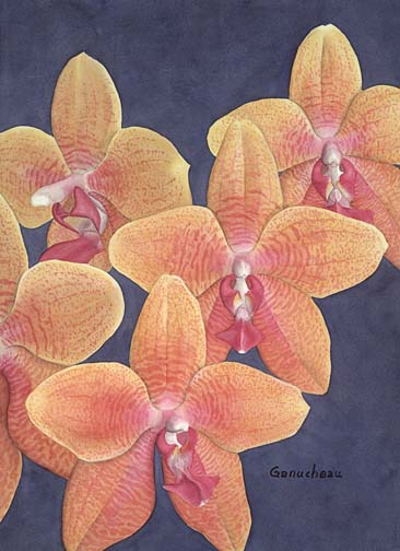 orchid art phaleanopsis orchids hybrid phal painting giclee print (Hausermann's Goldcup x violacea)