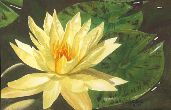 Lillys first morning watercolor painting lily waterlily painting waterlilies art watercolor yellow mightylinksfo