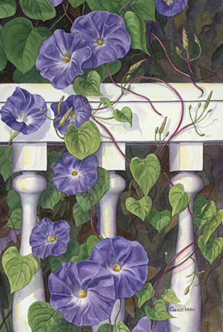 Morning Glory painting art watercolor