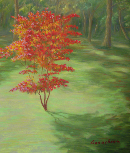 Japanese Red Maple, Pastel art pastel painting