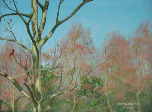 pastel art painting of a cardinal in a sycamore tree