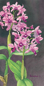 Cattleya bowringiana orchid orchids art painting paintings print cattleya cattleyas species