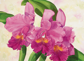 Orchid intoxication, orchid art print of corsage orchid Cattleya Nigrescent