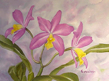 Cattleya orchid art painting watercolor Laeliacattleya LC Tiny Treasure