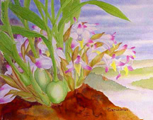 Bothriochilus bellus orchid art watercolor painting species