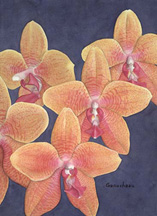 orchid art phaleanopsis species watercolor painting