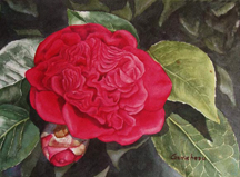 red peony form camellia flower floral watercolor art painting
